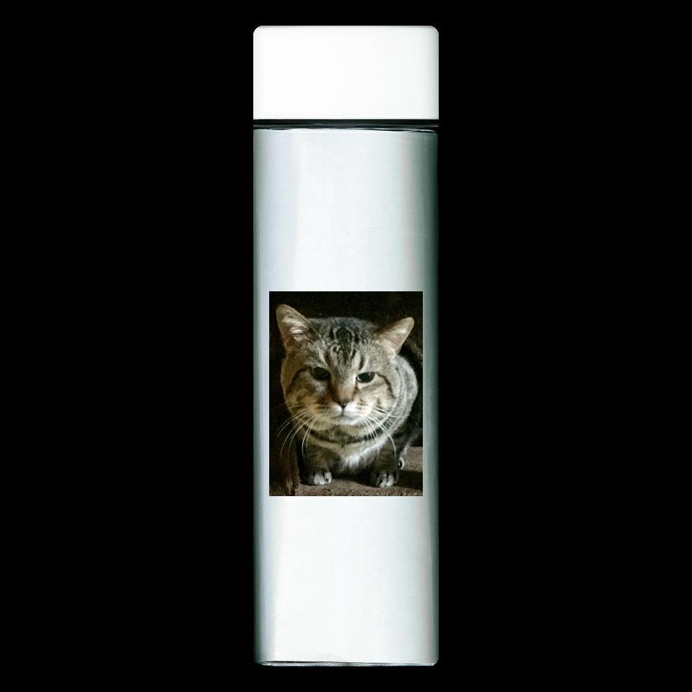 見つめる愛猫 スクエアクリアボトル