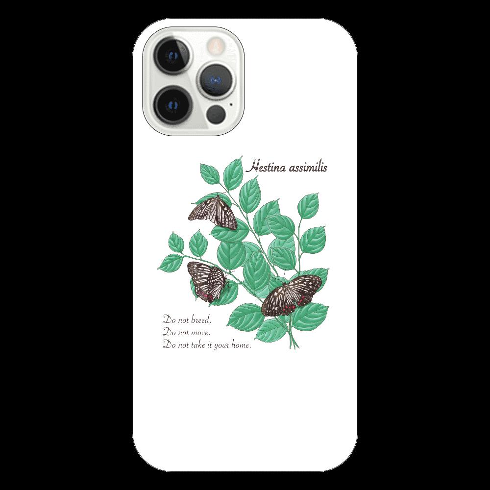 アカボシゴマダラとエノキ iPhone12 Pro